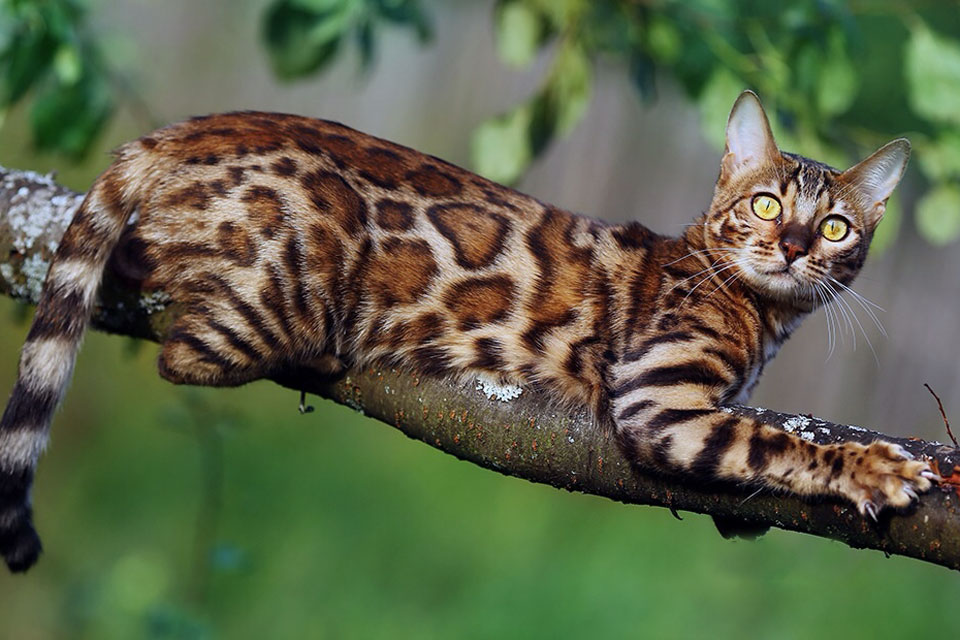 Бизнес план питомник для кошек список перспективных бизнес идей