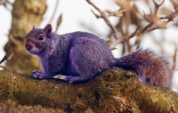 Михаил Воронин. Как ловить «фиолетовых белок»