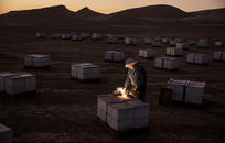 Кто ворует пчёл: В США похищают сотни ульев в год на миллионы долларов