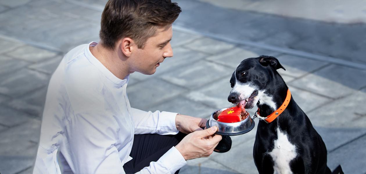 И пёс с ним: Как поп-звезда Сергей Лазарев делает бизнес на десертах для собак