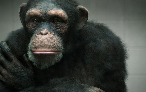 Volkswagen извинился за опыты на обезьянах