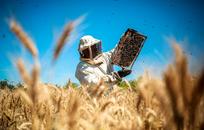 Человек и пчела: Как Пётр Прокопович построил самую большую пасеку в мире