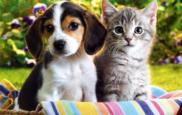 В Англии запретят продажу щенков и котят в зоомагазинах