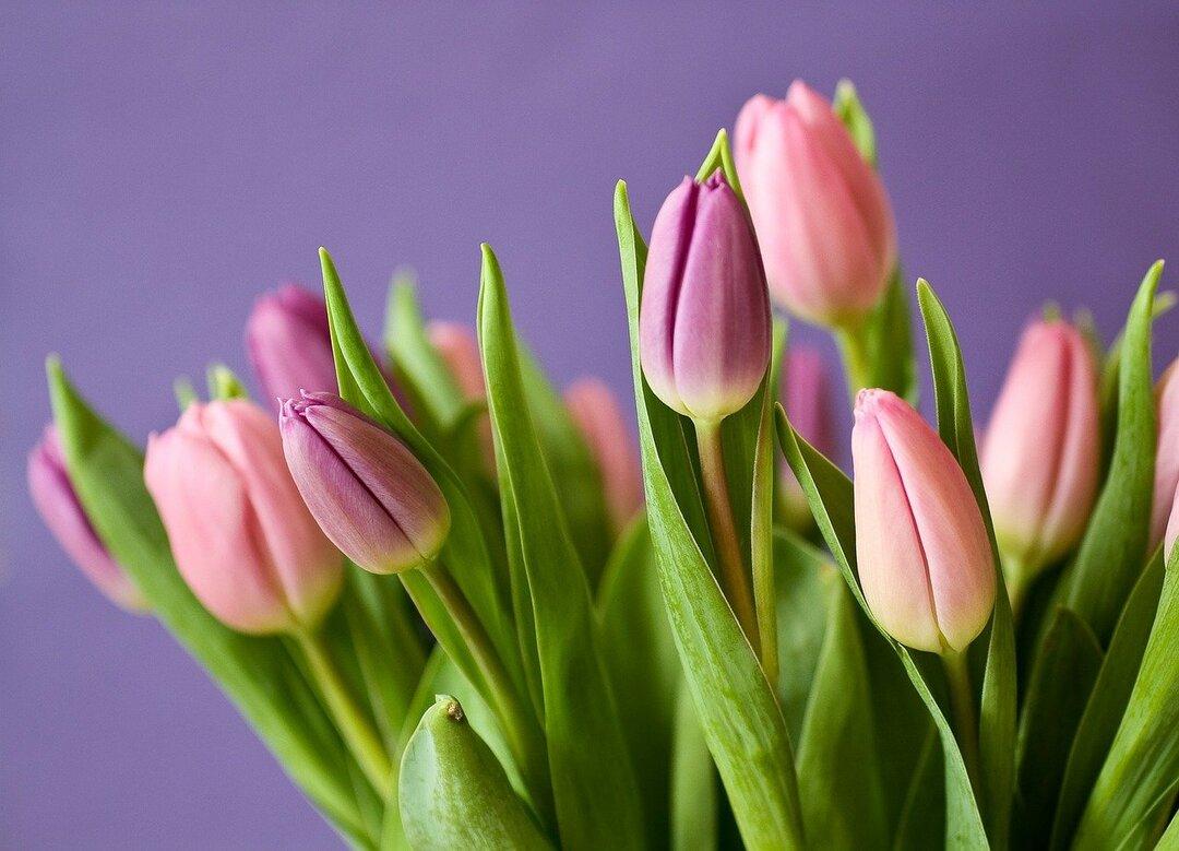 Россиян предупредили о подорожании цветов на 40% к 8 Марта