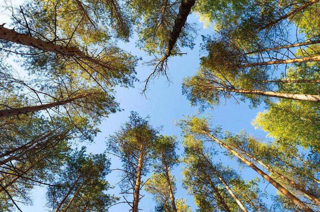 Ущерб от чёрных лесорубов за год превысил 12 млрд рублей