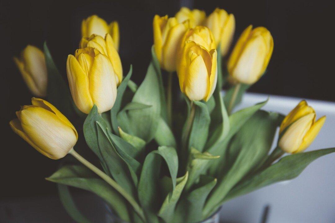 Россияне потратили 530 млн рублей на цветы и конфеты к 8 Марта