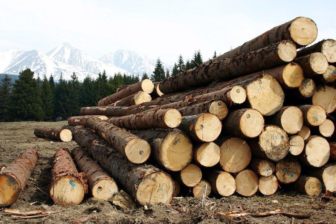 Российский лесопромышленный холдинг Segezha Group привлёк 30 млрд рублей в ходе IPO