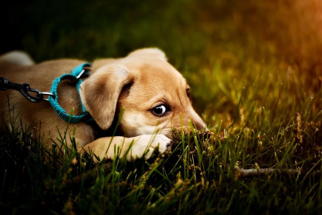Усыпление за счёт владельца. В Китае ввели штрафы за выгул собак без поводка