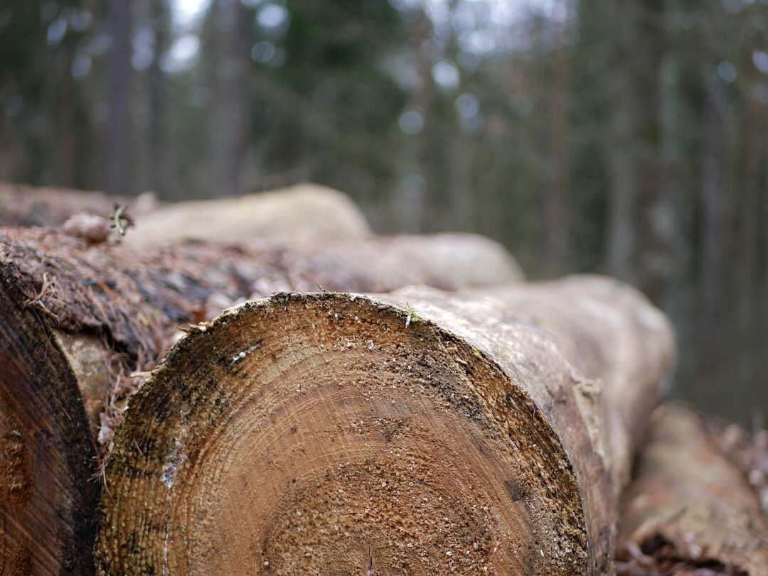 Бизнесмен украл лес в Сибири на 5 млн рублей
