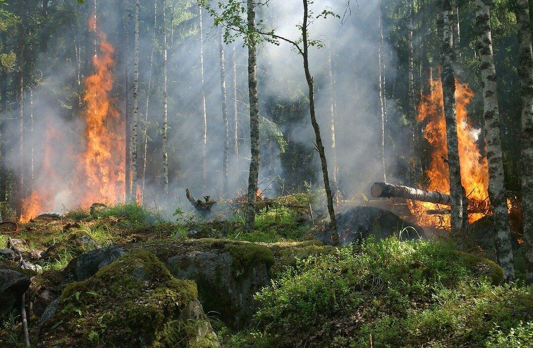 Учёные из Южной Кореи пожертвовали Якутии сотни тысяч рублей на борьбу с пожарами