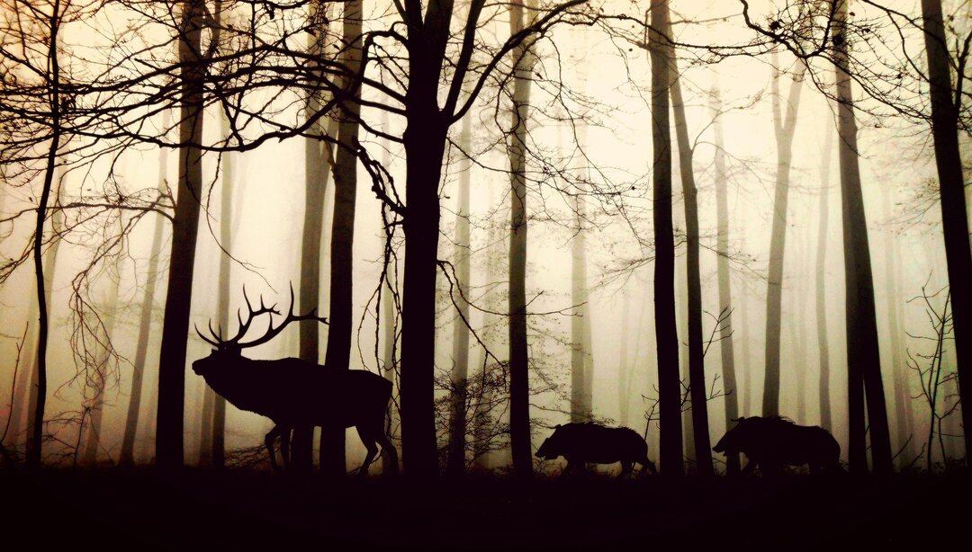 Дроны и цифровые ошейники. В России потратят 1 млрд рублей на слежку за оленями